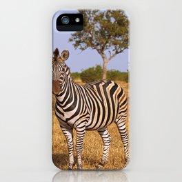 Zebra in Africa, wildlife iPhone Case
