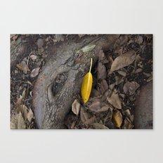 lone yellow leaf  Canvas Print