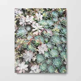 A group of Succulents Metal Print