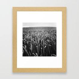 Harvest II Framed Art Print