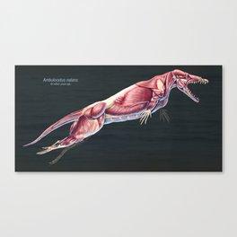 Ambulocetus natans Muscle Study Canvas Print
