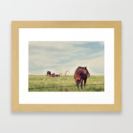 camera shy Framed Art Print