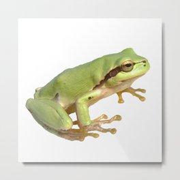 European Tree Frog Metal Print