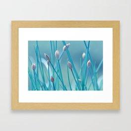 Allium turquoise 95 Framed Art Print