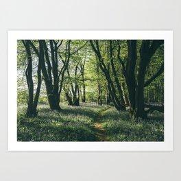 Path through Bluebells growing wild in natural woodland. Wayland Wood, Norfolk, UK. Art Print
