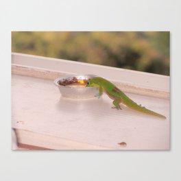 Hawaiian Gecko Canvas Print