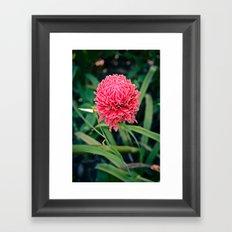 Tropical Flower: Thailand Framed Art Print