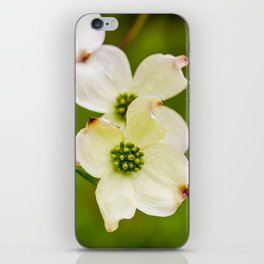 March of the Dogwood iPhone Skin