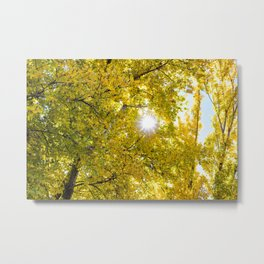 Sunlight Filtering through Beautiful Yellow Fall Foliage at Lake Cuyamaca, California Metal Print
