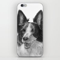 border collie iPhone & iPod Skins featuring Border collie by Doggyshop