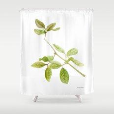 A branch of the tree Psidium fortium Shower Curtain
