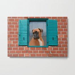 Window Brickwall Boxer Dog Metal Print