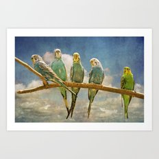 Parakeets perched on a branch againts a cloudy blue sky Art Print
