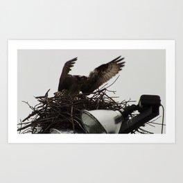 Osprey female- Arnprior 2017 Art Print
