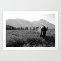 Lone Buffalo Art Print