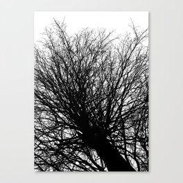 Branches 6 Canvas Print