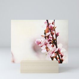 Cherry Blossoms Mini Art Print
