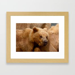 Brown Bear Grizzly Framed Art Print