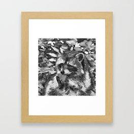 AnimalArtBW_Raccoon_20170601_by_JAMColorsSpecial Framed Art Print