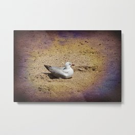 Gull on sand Metal Print