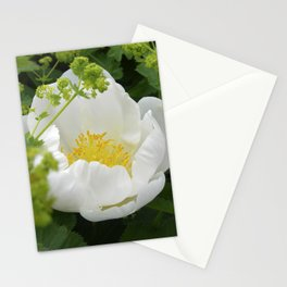 peony bloom macro XXVI Stationery Cards