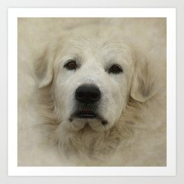 Great Pyrenees Art Print