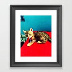 Kitters Framed Art Print