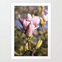magnolia Art Prints featuring Magnolia by AlejandraClick