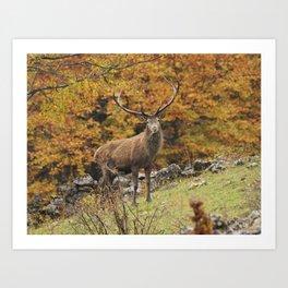 Cervo Maschio Art Print