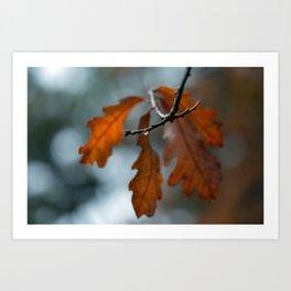 Rain Drop and Oak Leaves Art Print