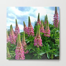 Rose Lupins in the Garden Metal Print