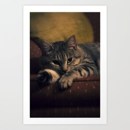 phil cat ii Art Print