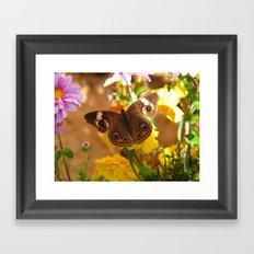 The Common Buckeye Framed Art Print
