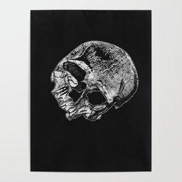 Human Skull Vintage Illustration  Poster