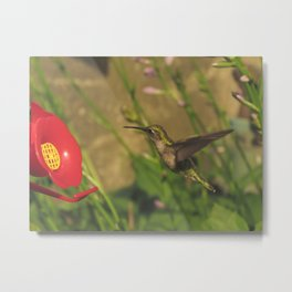 Hovering hummingbird 33 Metal Print