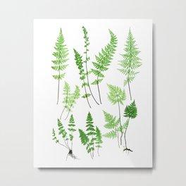 Antique Fern Print No.6 Green Nature Botanical Art Metal Print