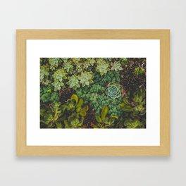Botanical No. 4224 Framed Art Print
