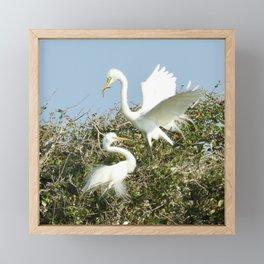 Bird Series: Nesting Great Egrets Framed Mini Art Print