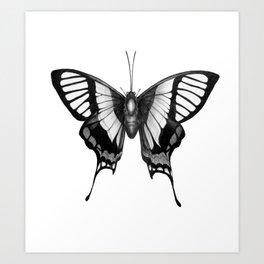 Butterfly Wings Art Print
