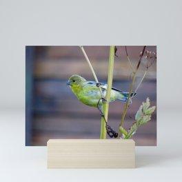 Goldfinch on Fennel Mini Art Print