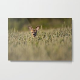 Roe Deer in Wheat Metal Print