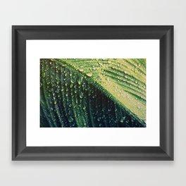 Wet leaf Framed Art Print