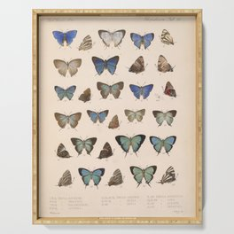 Vintage Scientific Insect Butterfly Moth Biological  Species Anatomy Illustration Serving Tray
