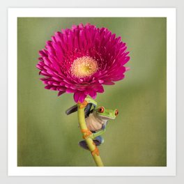 Red Eyed Tree Frog on a Flower Art Print