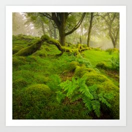 Magic garden 2  - Wicklow Mountains  (RR90) Art Print