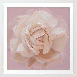 DUSKY ROSE Art Print