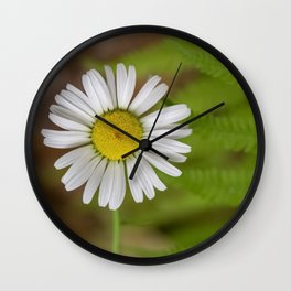 Daisy Among Ferns Wall Clock