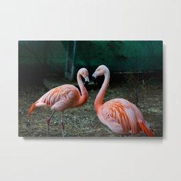Love, Flamingos Metal Print