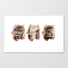3 owl red Canvas Print