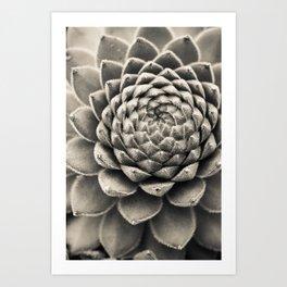 Sempervivum Study Black and White - Succulent photograph - houseplant botanical print Art Print